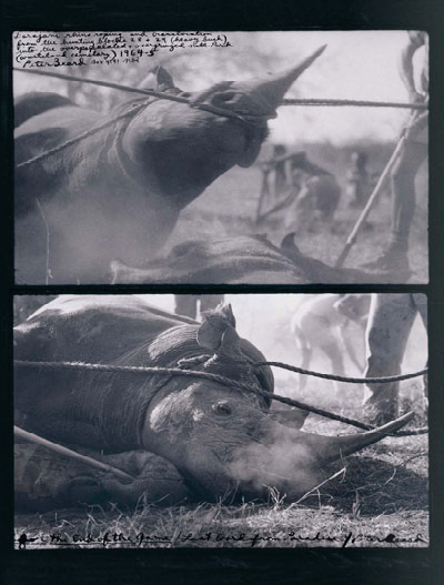 Peter Beard rhino hunting secuence