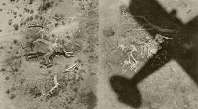 Peter Beard plane shadow over death elephant carcass