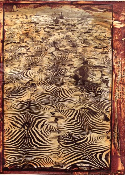 zebra skins by Peter Beard photographer