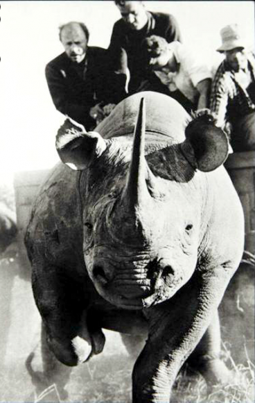 Peter Beard rhino huntting