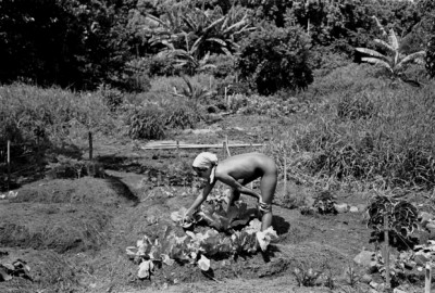 6_Taylor_camp_hawaii_hippy_woman working the land in the nude