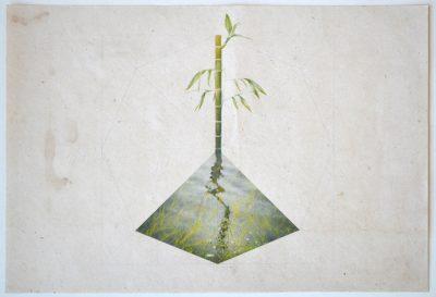 3-quye-arbol-_-planta-_-montedibujo-sobre-papel